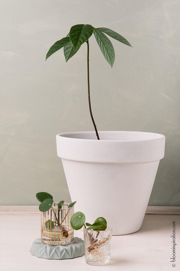 Amazona DIY Groene plantenhoek witte pot grijze muur