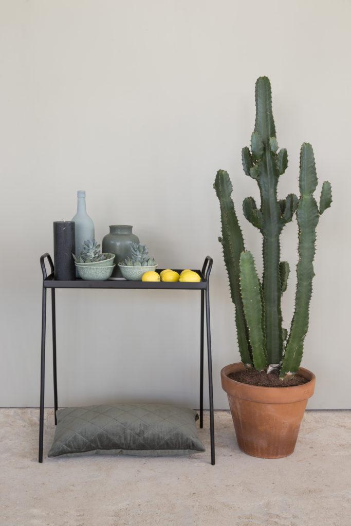 Amazona krijtverf Olijfgrijs Ranke tafel cactus 2